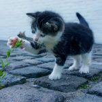 猫ちゃんの大好きなお魚を使った最高品質キャットフード☆